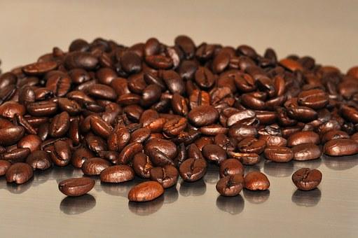 제10회 커피나무축제 개막